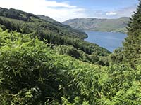 Ardgoil peninsula. Getting higher and into the tree line