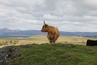 Dumyat hill run. Sometimes the locals oblige you with a good picture opertunity.