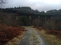 Queen Elizabeth forest park. Image from Queen Elizabeth forest park