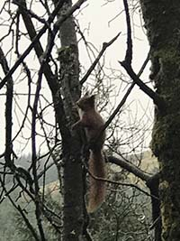 Glens Kendrum and Ogle. We love the red squirrels