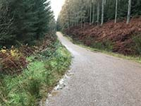 Aberfoyle to Loch Venachar. Start of the trees