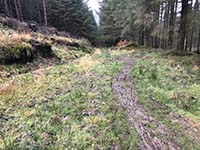 Aberfoyle to Loch Venachar. Short and muddy section