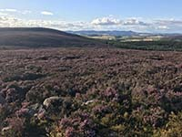 Meikle Tap. View across the heather