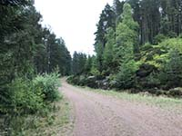 Meikle Tap. Good quality dirt road and calming trees