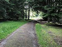 Loch Skene . Less trees