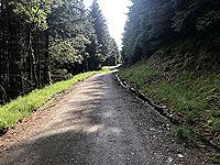 Glen Loin Loop. Lots of trees