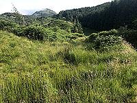 Glen Loin Loop. First main hill ahead