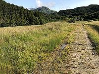 Glen Loin Loop. Path turning towards a trail