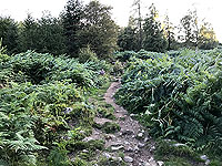 Scolty hill and more. Path is quite narrow in parts but good quality