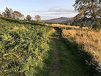 Scolty hill and more. Good running paths with gentle slopes