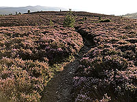 Scolty hill and more. Path through the heather from the tower