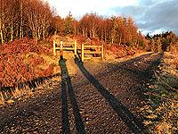Ben Ledi. The path crosses a forest road