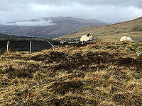 Killin - Lochan Breaclaich. There is always sheep