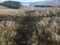 Killin - Lochan Breaclaich. Sometimes you can see a bit of a path