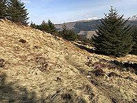 An Sidhean. Path does improve a little