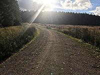 Durris Loop. Running into the evening sunshine