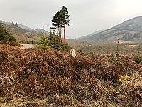 Kinlochard 5 lochs. Open countryside