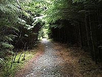 Kinlochard 5 lochs. Up through the trees