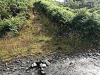 Kinlochard 5 lochs. Easy to miss, look for the arrow