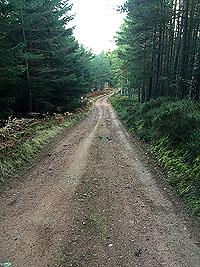 Aboyne games hill run. This is a long climb