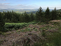 Aboyne games hill run. Looking down Deeside