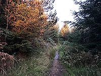 Aboyne games hill run. Out onto Craigendinnie