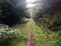 Aboyne games hill run. Can get very muddy