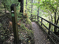 Plodda falls. Path to viewing area