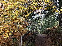 Plodda falls. Autumn