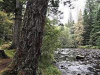 Plodda falls. Beside the river