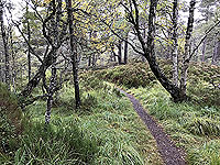 Coire an Loch loop. Trail to the loch