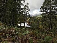 Coire an Loch loop. The loch through the trees