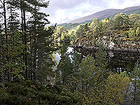 Coire an Loch loop. The stillness of the loch through the trees