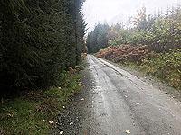 Craig Hill loop. Firmer surface
