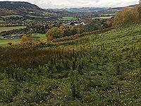 Craig Hill loop. Looking down on Aberfeldy