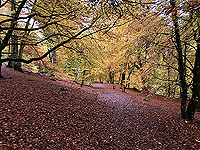 Craig Hill loop. The trees are stunning in Autumn