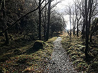 Rowerdennan to Loch Arklet. On the low path