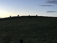 Sheriffmuir loop. Horses on the hill top