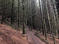 Run Ben Bouie loop.  : Inside the spooky woods