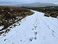 Run Ben Bouie loop.  : Higher up the hill