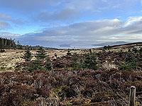 Run Ben Bouie loop.  : Loch Lomond in the distance