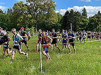 Gallus Running  : Slow through the long grass
