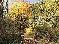 Autumn colours on the Loch Ard forest loop