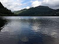 Swans on Loch Lubnaig